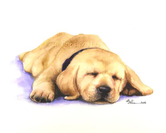 Sleeping-Pup