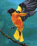 BaltimoreOriole