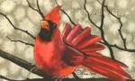 Proud-Cardinal