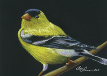 Gold-Finch-II