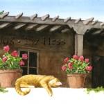 Sunning-Cat-at-La-Puerta